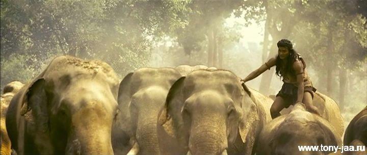 Онг-Бак 2 - Слоны