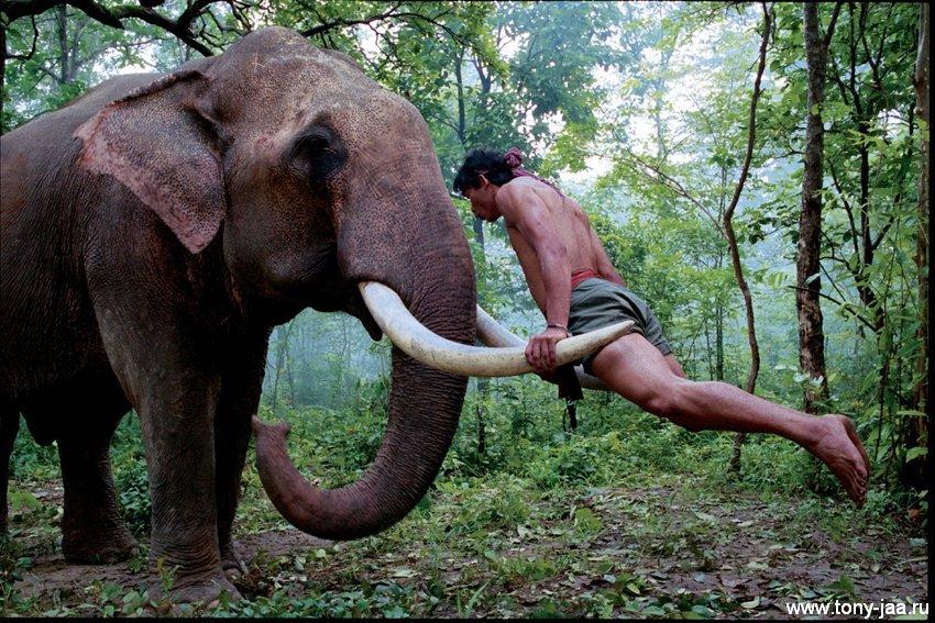 Кам на бивнях слона
