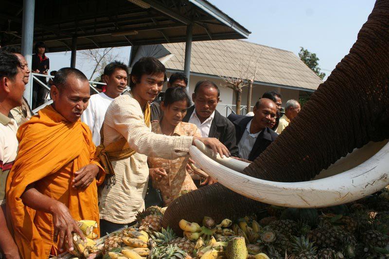 Угощение слона