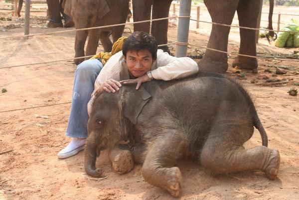 Тони Джаа и маленький слон