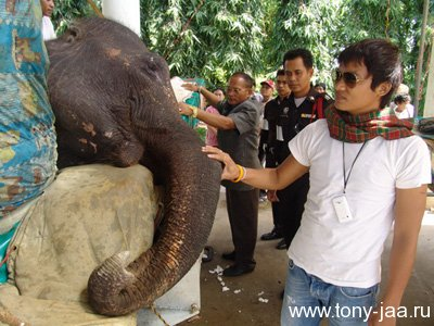 Тони Джаа в госпитале утешает слона