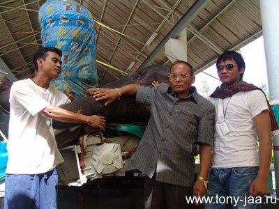 Тони Джаа с отцом в госпитале для слонов