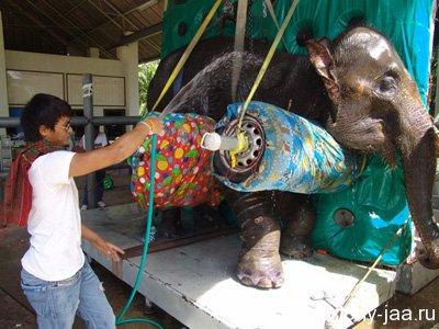 Тони поливает слониху водой