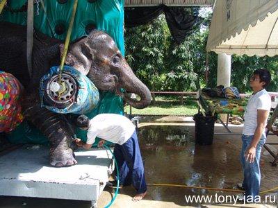 Тони Джаа в госпитале для слонов
